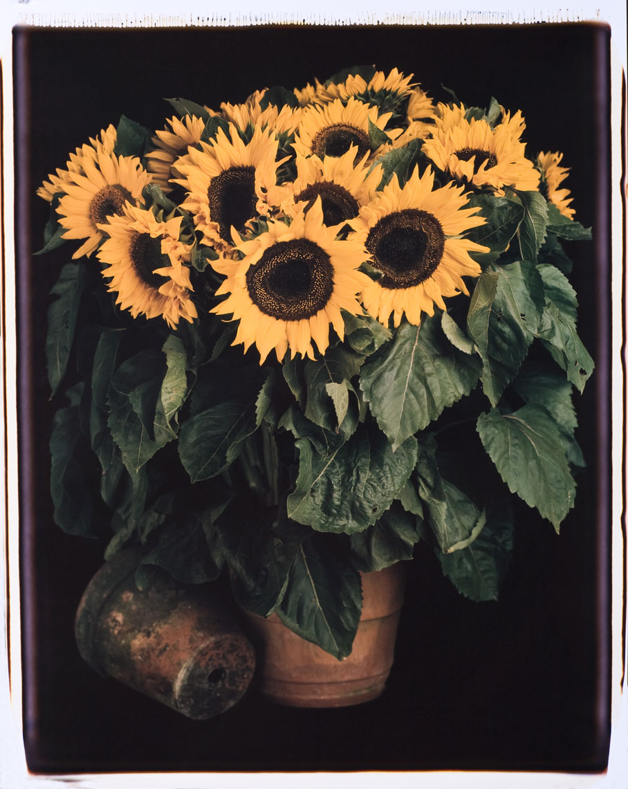 ewatt_20x24sunflowers_site